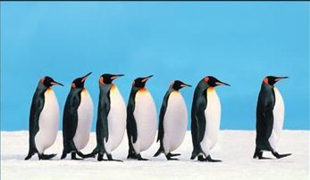 penguin_leadership_1